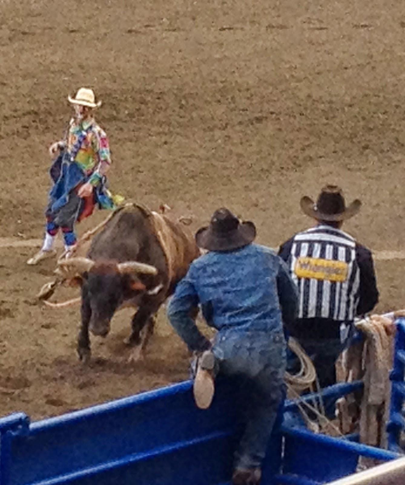 Teri S World Cody Rodeo