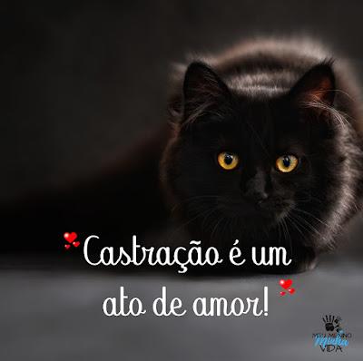 castração e cuidados com a alimentação dos gatos