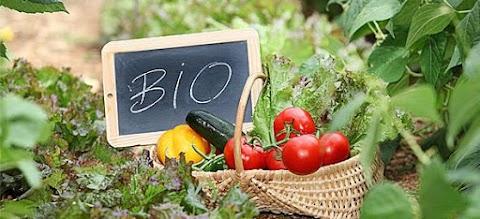 Γιατί πρέπει να προτιμάμε τα βιολογικά προϊόντα;