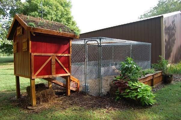Living Roof Coops – Chicken Coop With Garden Roof Plans