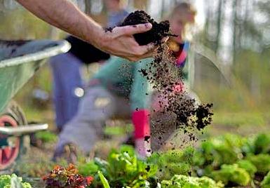 Preparing Healthy Soil