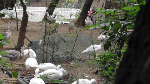 Delhi Jor Bagh Garden Birds 881