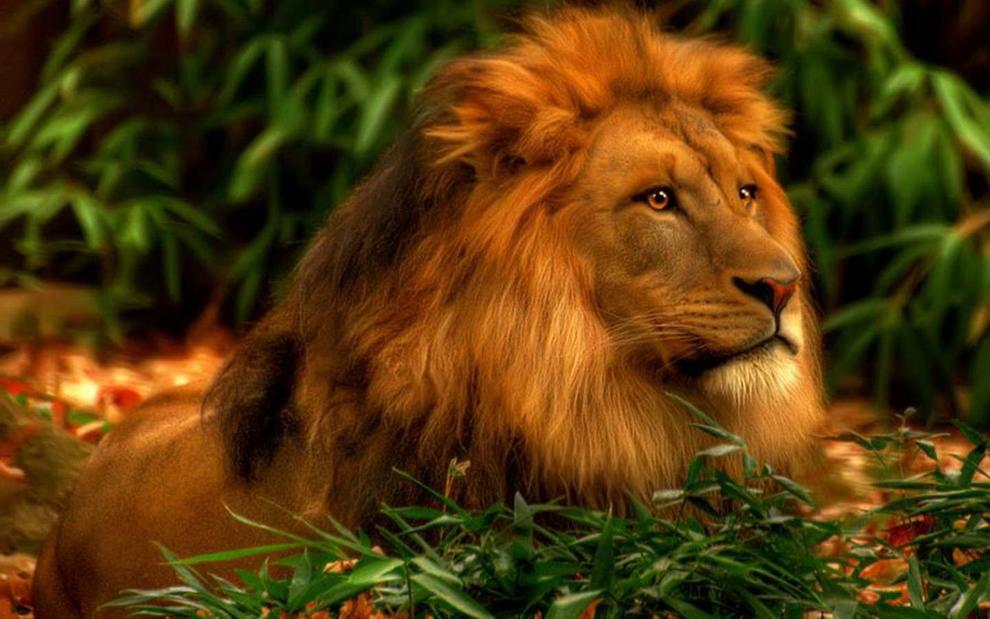 Best 55 Lion Hd Wallpapers Pictures Stock Photos Download