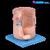 Torso Serat Otot Tulang Rangka dengan Motor End-plate