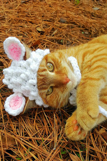 Adorable White Lamb Hat for a Cat, another of our favorite cat hats for Halloween