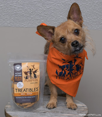 Jada with a bag of Treatibles CBD dog treats