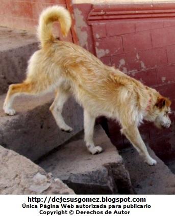Foto de perro caminando en la escalera. Foto de perro tomada por Jesus Gómez