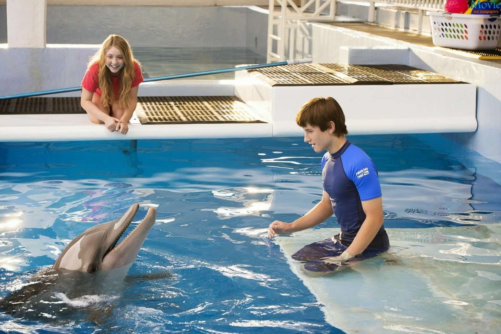 Image result for dolphin tale 2