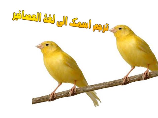 ترجمة اي اسم الى لغة العصافير