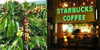 buah kopi dan kafe kopi modern