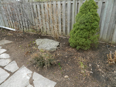 Leslieville Back Yard Spring Cleanup in Toronto After by Paul Jung--a Toronto Organic Gardener
