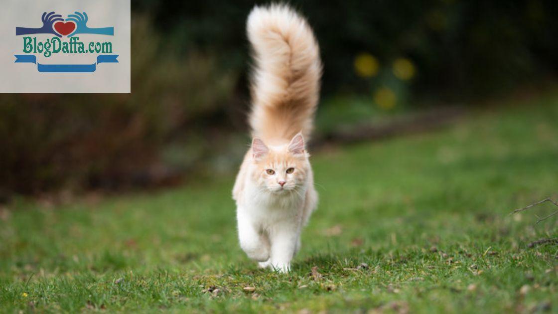 Arti dari tiap Gerakan Ekor Kucing