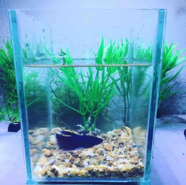 Image The Appeal of Betta Fish Bowl with Plant