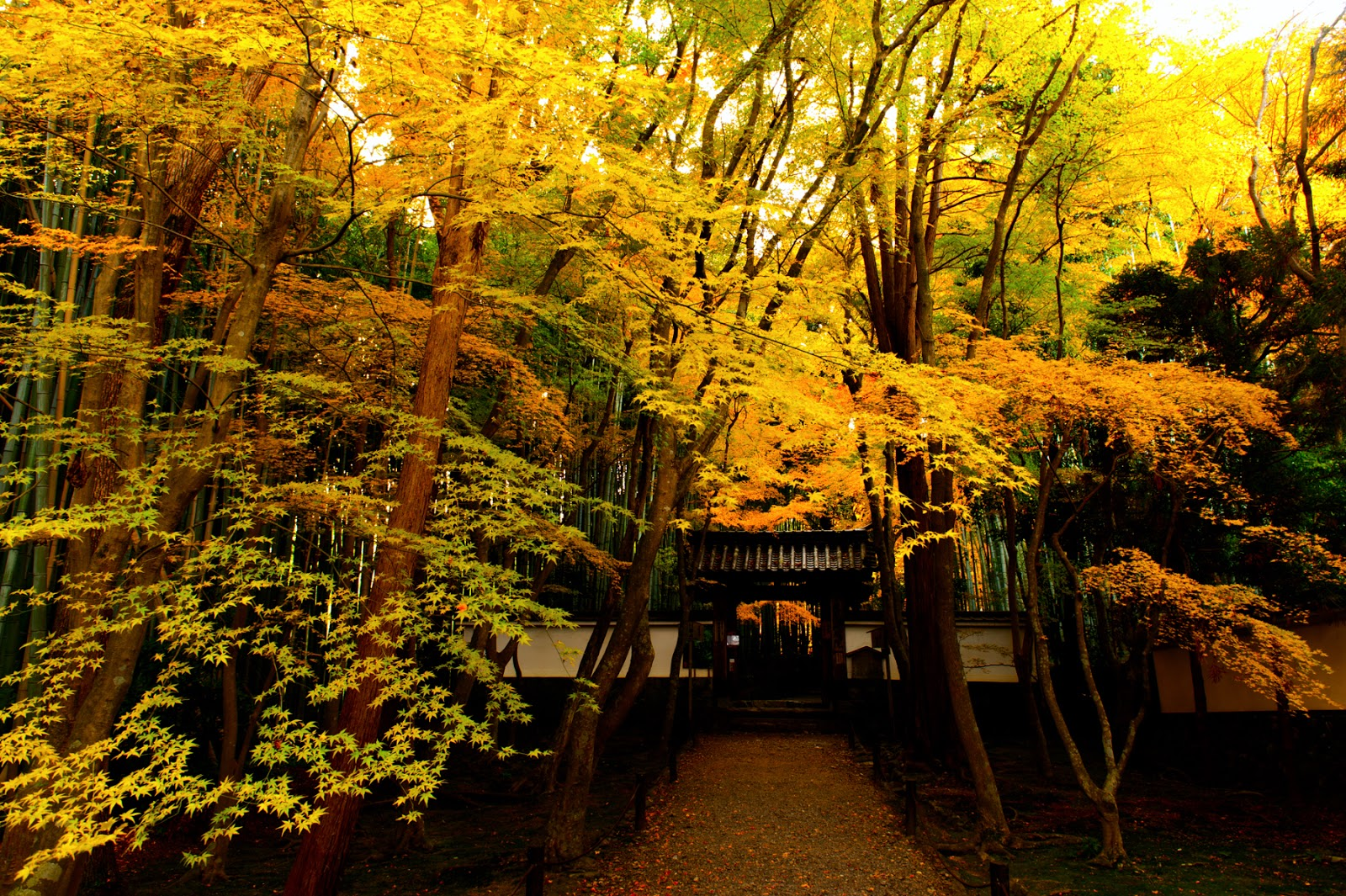 衣笠山 (京都府)