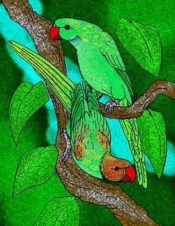 Papagayo de Rodrigues: Necropsittacus rodericanus
