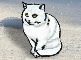 凍結猫(素材使用)