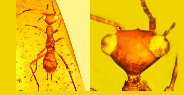 The Eight Most Incredible Fossils Preserved In Amber