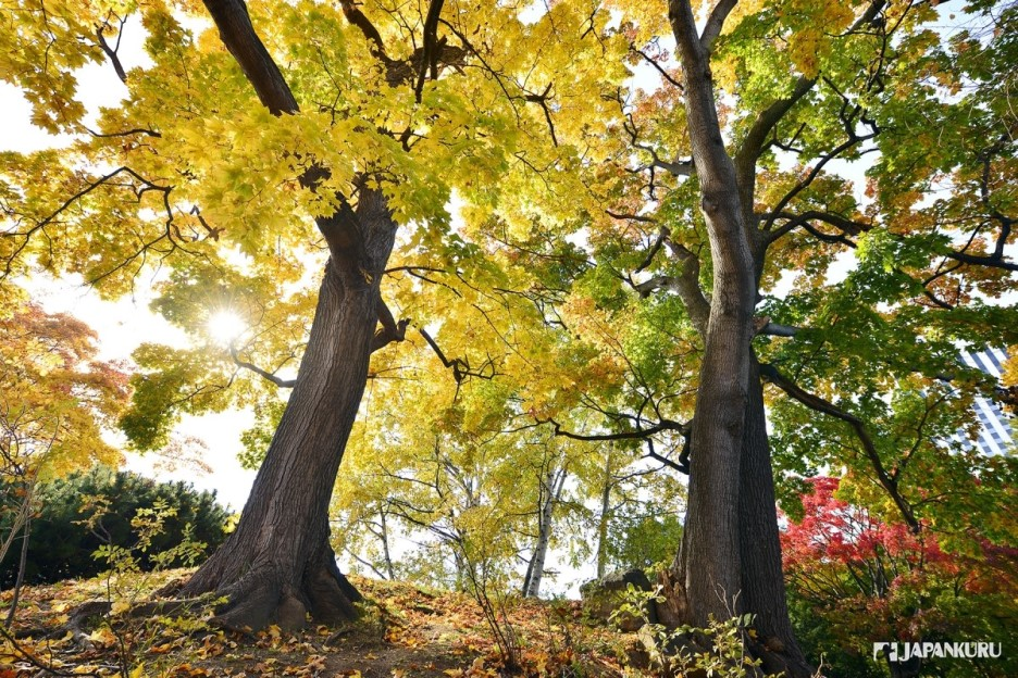 information on autumn season They are summer, rainy-season, autumn the website is rich both in presentation & information very lucid presentation of six seasons of bangladesh as per.
