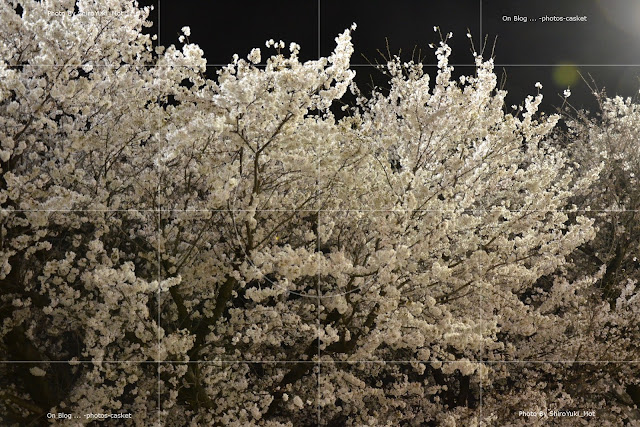 花 桜 夜桜 Night Lights Gerry Mulligan