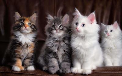 same-color-strips-billi-kittens-imagesfree-download