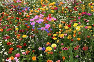 Realizará Jalisco su VII Feria de las Flores en Paseo Chapultepec