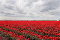 Польша флаг в виде природы