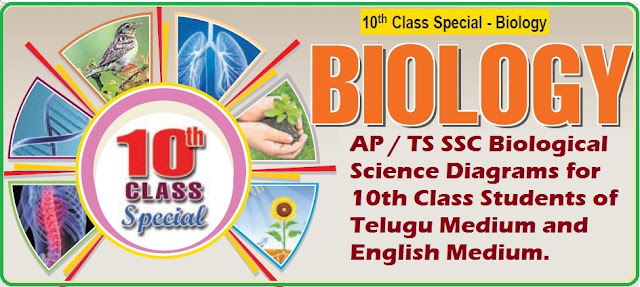 AP/TS SSC Biology Important Diagrams for 10th Class Telugu and English Medium