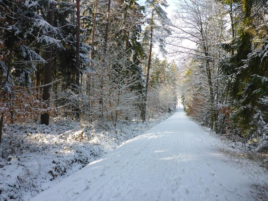 Лес, дорога, снег, зима