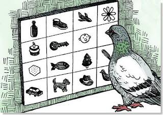 capacidad de las palomas para clasificar objetos