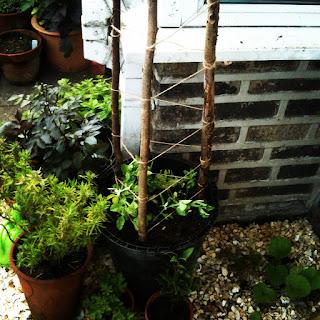 gardening, life on pig row, sensory gardening