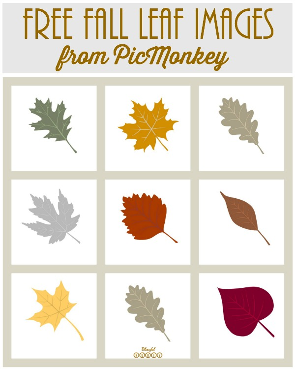 How to use FREE Fall images from Pic Monkey
