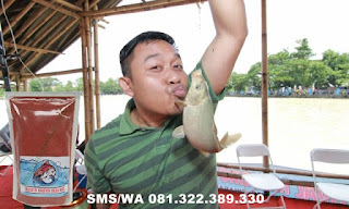 Umpan Ikan Mas Subang Khusus Di Danau Rawa Dan Situ