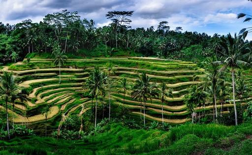 Daya Tarik Objek Wisata Teracce Rice Busungbiu Di Singaraja