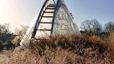 Grass Garden en los jardines de Kew: un escaparate de gramíneas del mundo