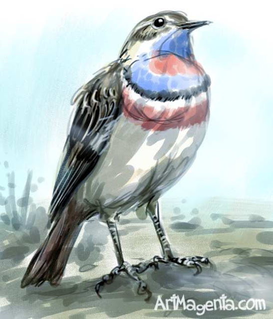 Bluethroat. Bird sketch by ArtMagenta