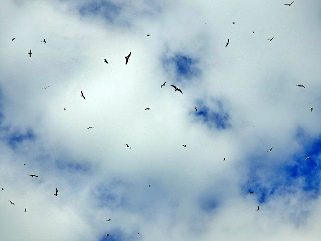 Seagulls in the sky, Cornwall