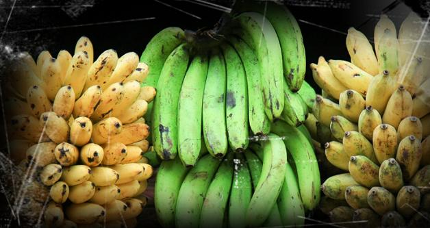 أنت لا تفكر في ذلك ، ولكن الموز على وشك الانقراض. من 5-10 سنة!