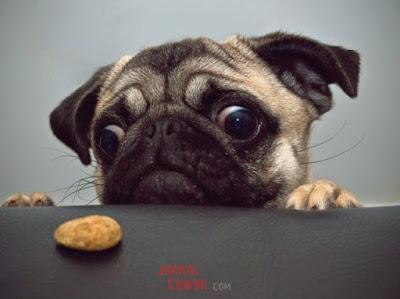 kenapa cewek suka anjing kucing lucu