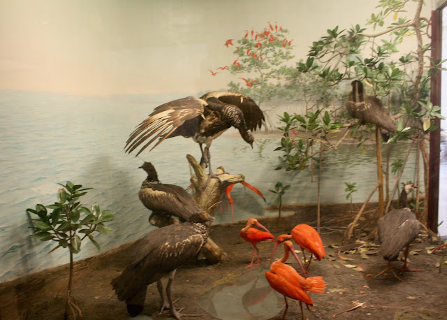 Taxidermy birds in a scene at The Field Museum