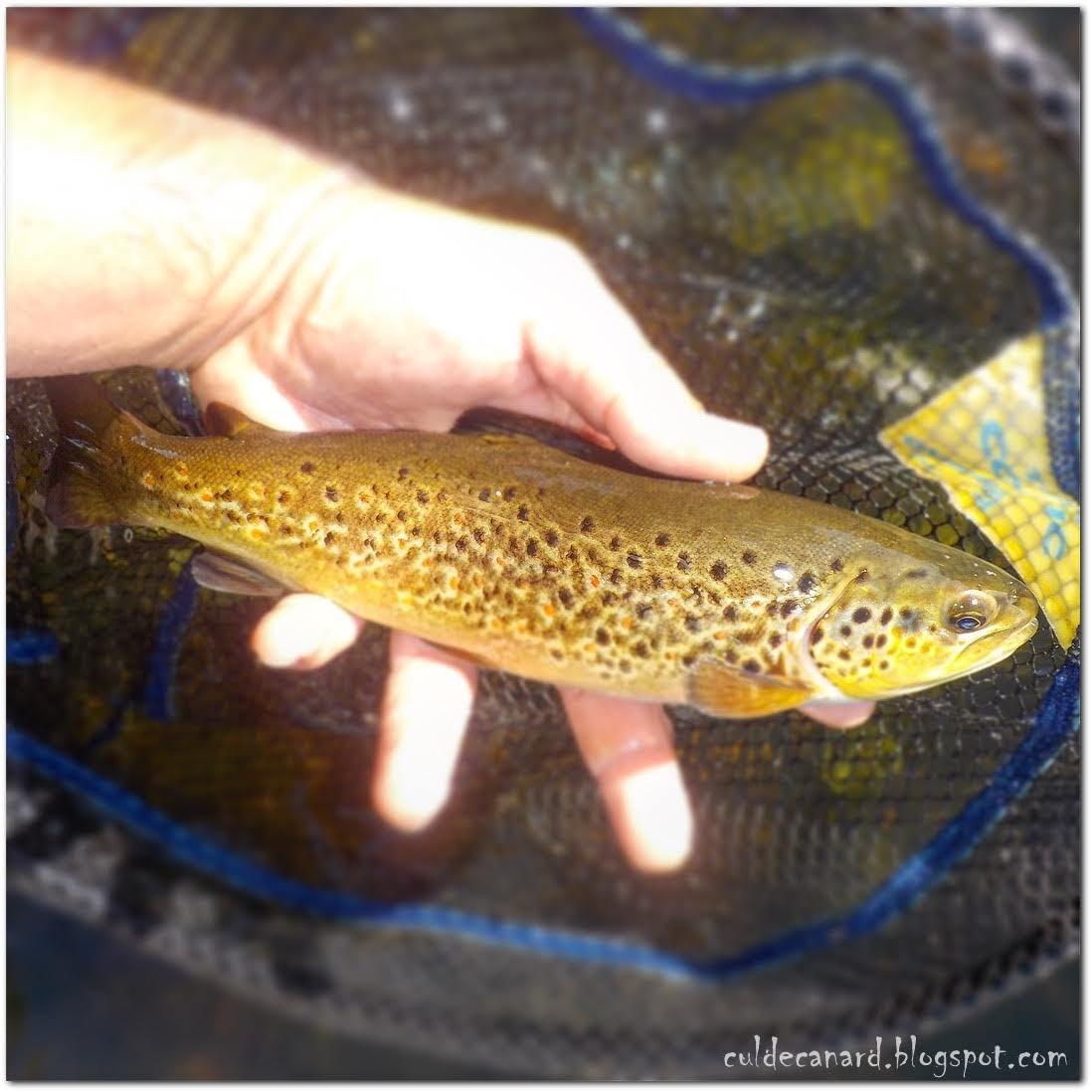 Cul de Canard - Fly Fishing Blog: Jornadas de agosto