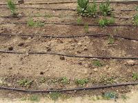 parcela cultivo huerto escolar