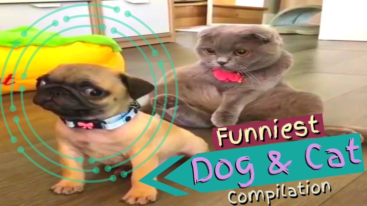 Funpetvid Cat and Dog