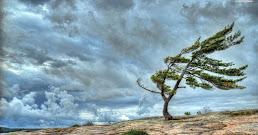 ¿Qué significa soñar con viento?