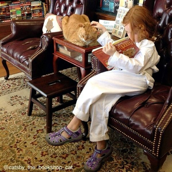 cat and child reading