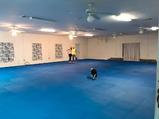 Greatmats Foam Economy 1/2 Inch dog training area
