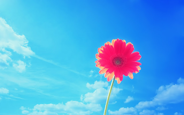 Blauwe achtergrond met roze bloem