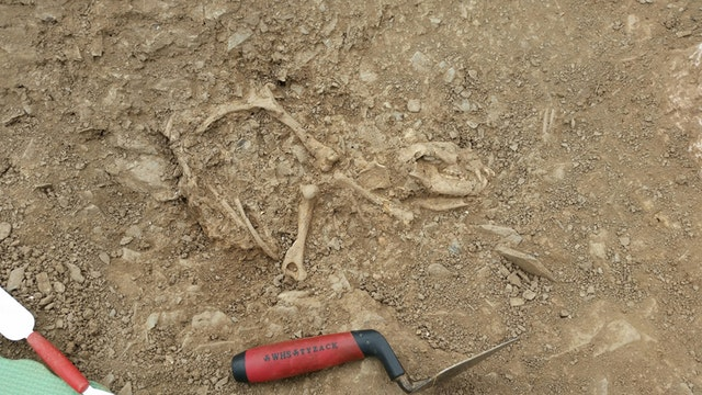 Ancient household waste gives more clues about Devon's Roman history