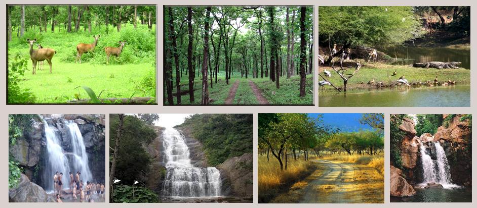 kathivada-alirajpur-van-वन क्षेत्र अलीराजपुर कट्ठीवाड़ा के जंगल