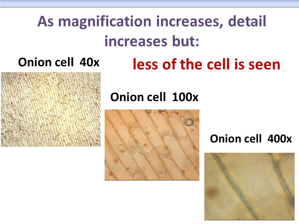 A Little Dose of Me: Cells  Onion Under Microscope 40x