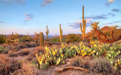 Paisaje en el desierto de Sonora (Cactus y Nopales) | wallpaper hd nature  1080p night